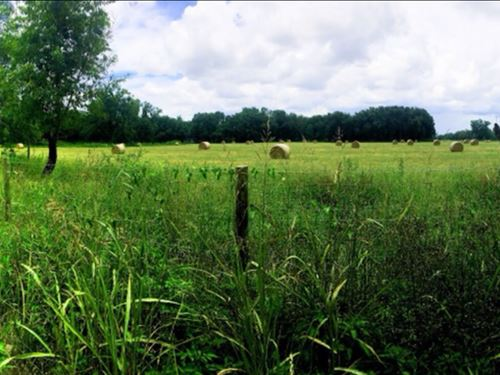 Beautiful Chiefland Acreage : Chiefland : Levy County : Florida