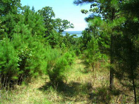 Mountian View Of Lake Sardis : Clayton : Pushmataha County : Oklahoma