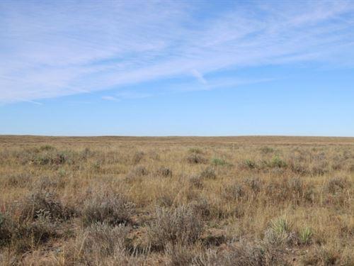 Brown Yuma Cty Pasture Land Aucti : Yuma : Colorado