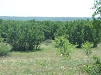 150+/- Acres In Eastland County : Cisco : Eastland County : Texas