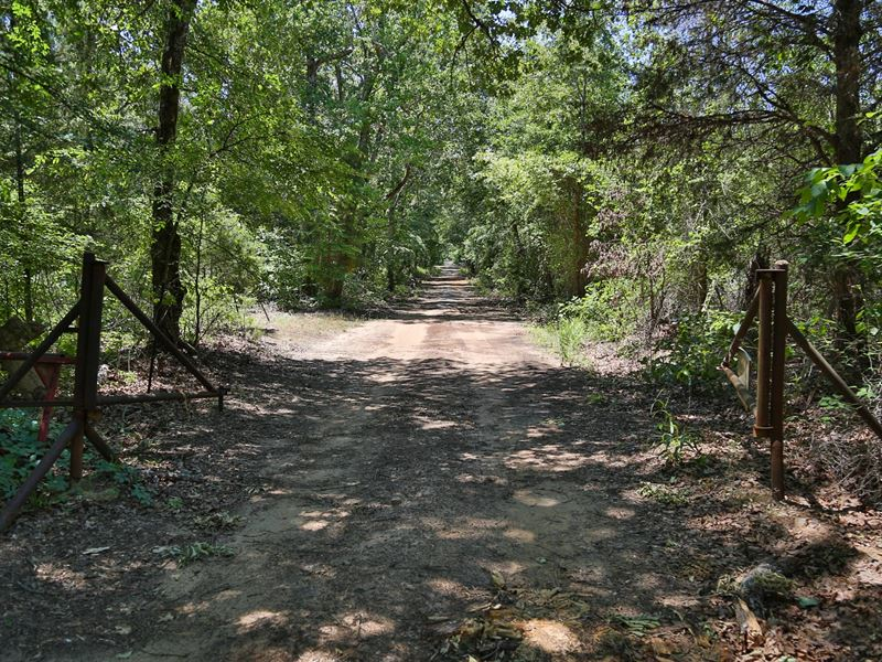 97 Ac Off Azalea Rd Indian Rock : Gilmer : Upshur County : Texas