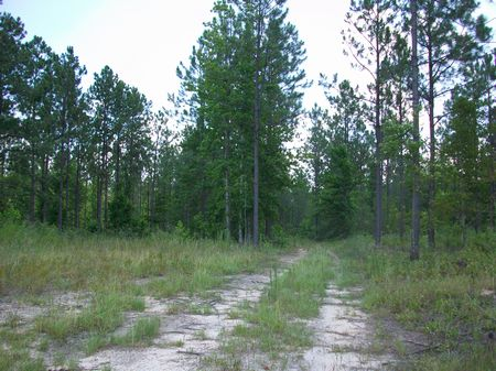 92 Acres Timber And Recreation Land : Eastman : Dodge County : Georgia