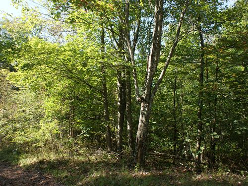 5.15 Acre Wooded Tract, Secluded : Galax : Carroll County : Virginia