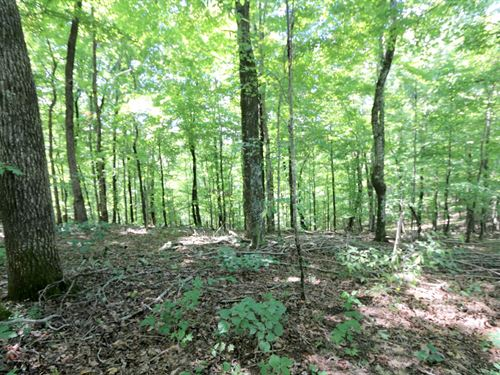 52 Acre Wooded Tract : Monterey : Putnam County : Tennessee