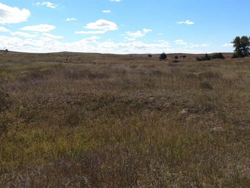 Birdwood Pasture, Sutherland Ne : Sutherland : McPherson County : Nebraska