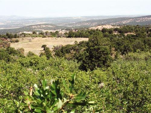 35 Acre Lot Homesites : Glade Park : Mesa County : Colorado
