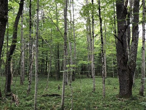 On Muskrat Brook : Ohio : New York County : New York