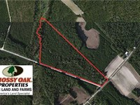 29.25 Acres of Residential Hunting : Tabor City : Columbus County : North Carolina