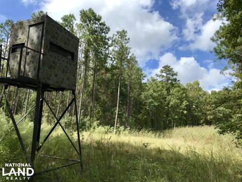 Black Belt Camp Creek Timber & Trop : McKinley : Marengo County : Alabama