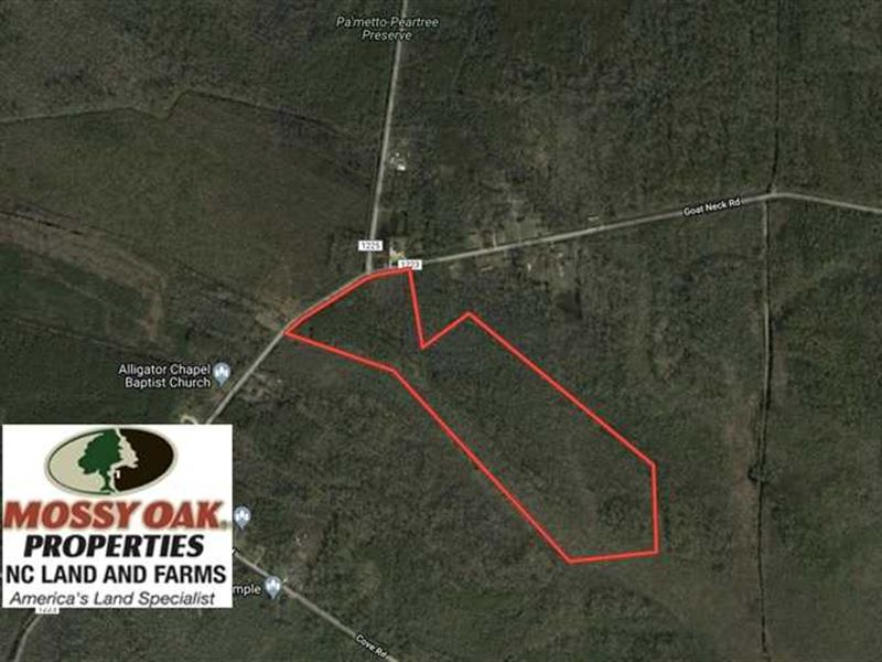Reduced, 41 Acres of Hunting Land : Columbia : Tyrrell County : North Carolina
