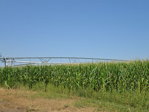 Bent County Colorado Irrigated : Wiley : Bent County : Colorado