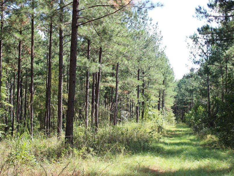 Recreational Investment : Forsyth : Monroe County : Georgia