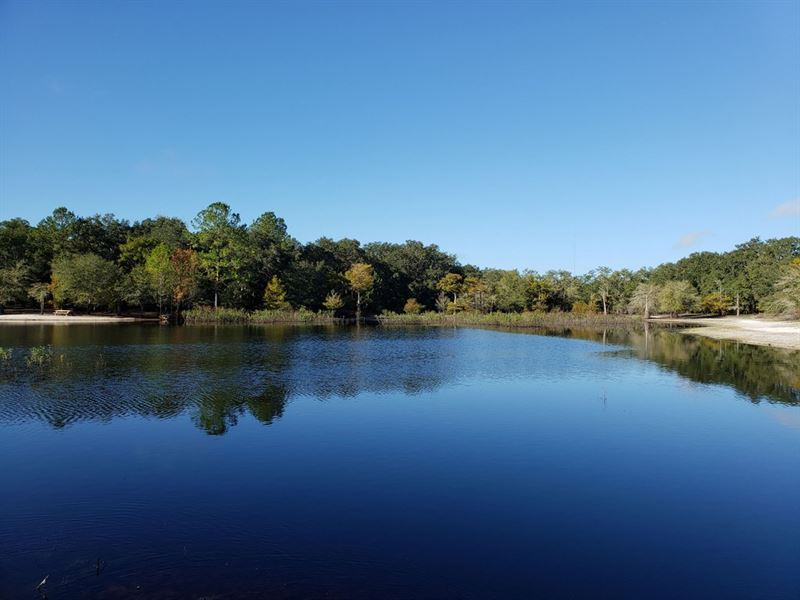 102 Acres Bordering Indian Lake : Anthony : Marion County : Florida