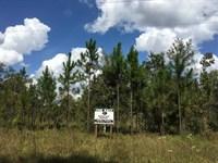 72 Acres Land For Sale in Camden : White Oak : Camden County : Georgia
