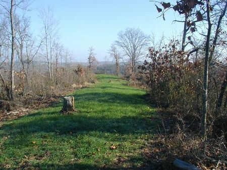 79 Ac. Hilltop Tract In Moundville : Moundville : Hale County : Alabama