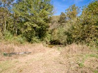 North Alabama Hunting Land : Stevenson : Jackson County : Alabama