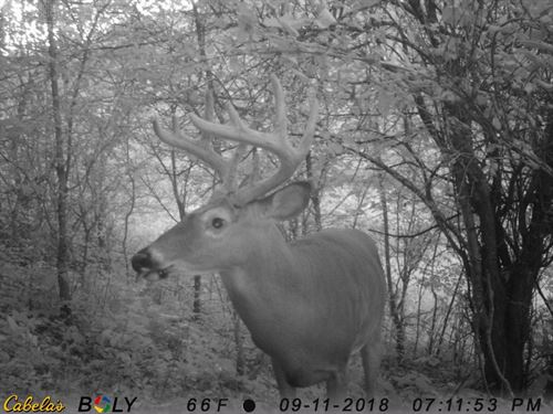Big Buck Hunting Land : Readstown : Vernon County : Wisconsin