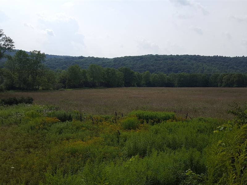 147 Acres Hunting & Farming Land : Preston : Chenango County : New York