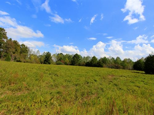 958 Wooded Acres : Centerville : Hickman County : Tennessee