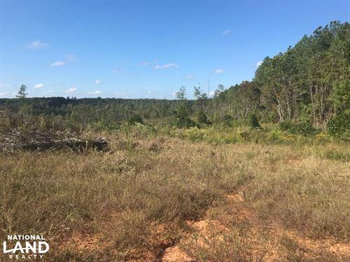 Jim Allred Road Bankston Tract : Bankston : Fayette County : Alabama