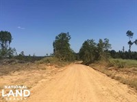 Freshly Harvested Timber Land : Gore Springs : Grenada County : Mississippi