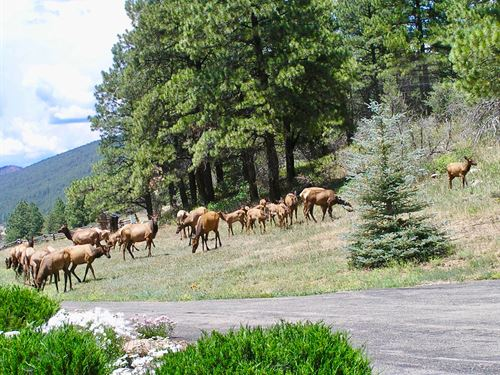 Trails End Ranch : Bayfield : La Plata County : Colorado