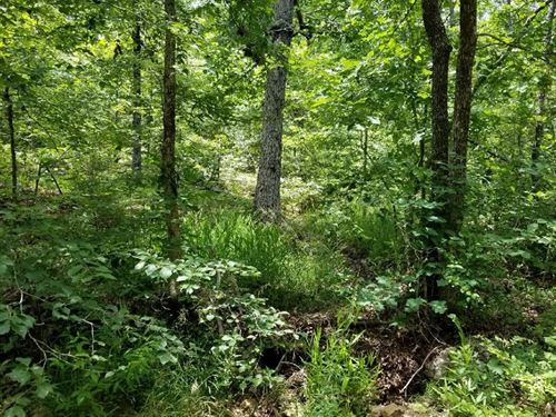 Ozark Hunting Land in Arkansas : Sitka : Sharp County : Arkansas