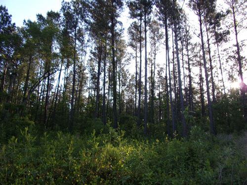 70 Acres Land Brooklet, Ga, Bulloch : Brooklet : Bulloch County : Georgia