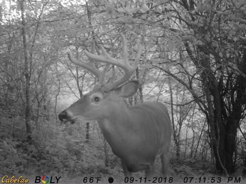 Big Buck Hunting Land Southwestern : Readstown : Vernon County : Wisconsin