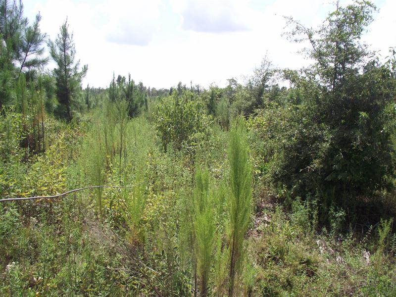 Summertown Country Estates Lot 2 : Summertown : Emanuel County : Georgia