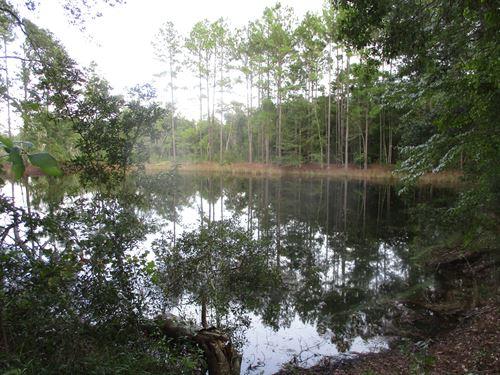 49+ Acres Loblolly Pine Tract : Blackshear : Pierce County : Georgia