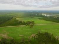 170 Acre Plantation With Home : Alma : Bacon County : Georgia