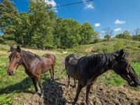 Hendershot Rd, 85 Acres : Cumberland : Guernsey County : Ohio