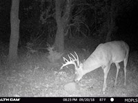 80 Acres Of Prime Hunting Land : Fall River : Greenwood County : Kansas