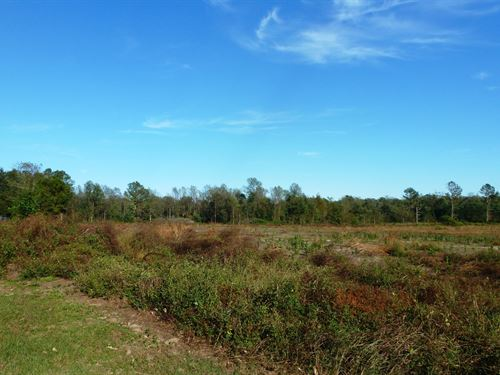 Partially Cleared Land, Creek : Albertson : Duplin County : North Carolina