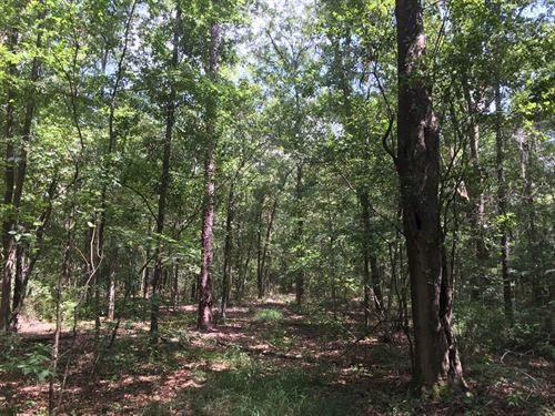 Hardwoods, Pines, And Pecans : Moultrie : Colquitt County : Georgia
