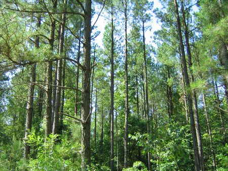 Brooks Creek Tract : Lexington : Oglethorpe County : Georgia