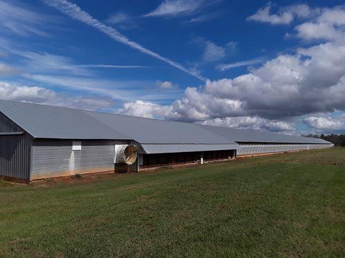 Poultry Farm : Ashford : Houston County : Alabama