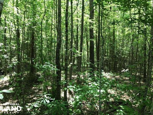 Cargile Road Fayette Hunting And Ho : Fayette : Alabama