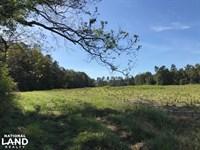 Hemingway Whitetail : Hemingway : Williamsburg County : South Carolina