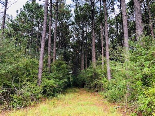 22 Acres / Mabile Road / Magnolia : Magnolia : Pike County : Mississippi