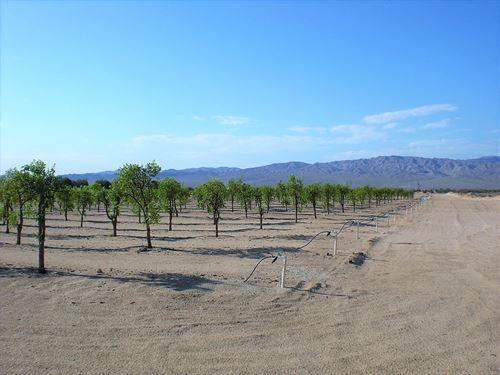 Prime 40 Acres Newberry Springs : Newberry Springs : San Bernardino County : California