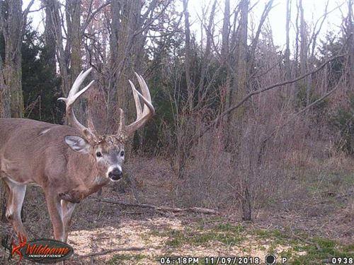 240 Acres of Great Hunting, Til : Preston : Pratt County : Kansas