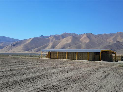 Alfalfa Farm For Sale : Winnemucca : Humboldt County : Nevada