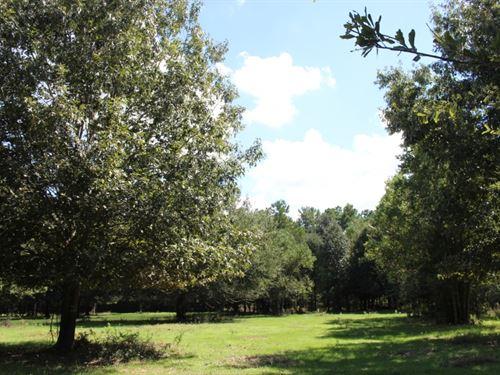 Jones Estate 32 : Montgomery : Texas