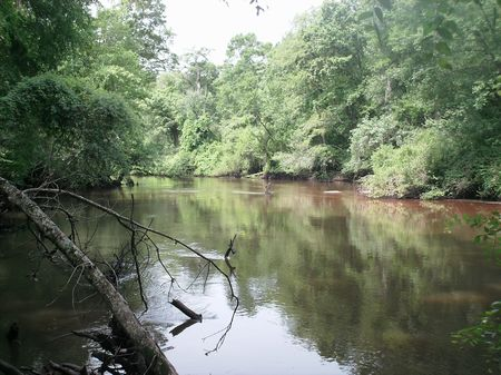 Ogeechee River Foreclosure : Millen : Jenkins County : Georgia