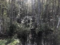 Burnt Bay Creek : Hortense : Brantley County : Georgia