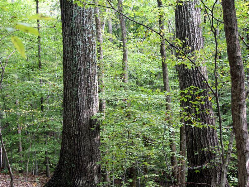Dillard Tract : Lynchburg : Amherst County : Virginia