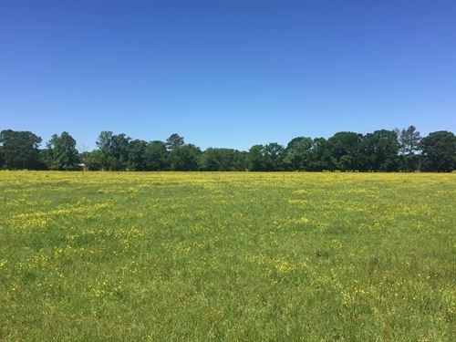 227.50 Acres Of Pastureland : Utica : Copiah County : Mississippi
