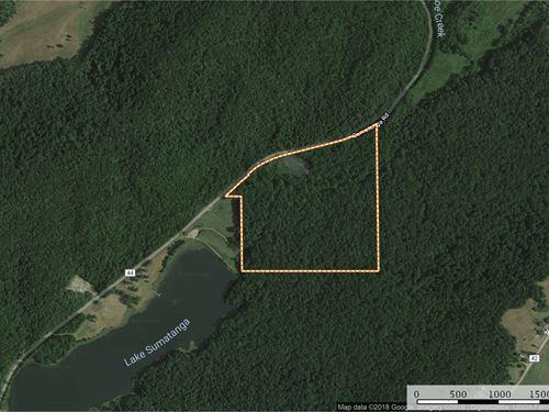 39 Acres Joining Camp Sumatanga : Gallant : Saint Clair County : Alabama